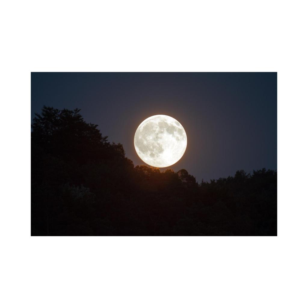 見事な満月